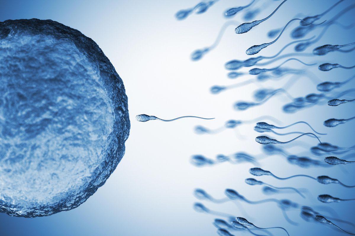 sperm covid 19